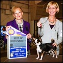 Rocky takes Best of Breed at Chambersburg