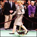 Rocky takes his walk at Westminster 2012