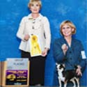 Rocky wins breed at Penn Treaty Kennel Club - November 2013