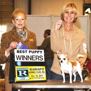 Bill wins Best Puppy at Ramapo