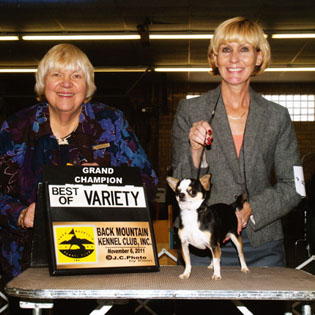 Rocky's championship win at Black Mountain Kennel Club