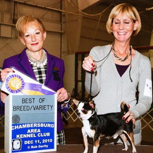 Rocky at Chambersburg Kennel Club