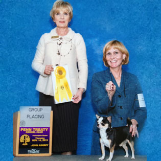 Rocky wins breed at 2013 Penn Treaty Kennel Club