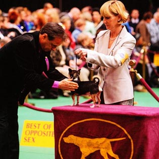 Rocky at Westminster Kennel Club dog show