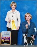 Rocky wins breed at Penn Treaty Kennel Club