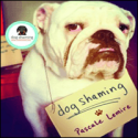 """""""Dog Shaming"""" is Hilarious, But Do Dogs Really Feel Shame?"""