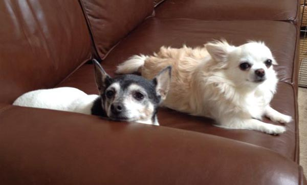 newly adopted senior dog Terra with Kate
