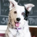 Dog Intelligence and the Science Behind their Affection