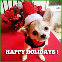 Happy Holidays from Connie Newcomb and the entire canine family!