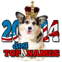 2014 Top Dog Names