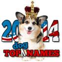 2014 Top Dog Names
