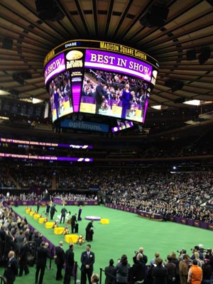 A Little History Lesson About The Westminster Dog Show