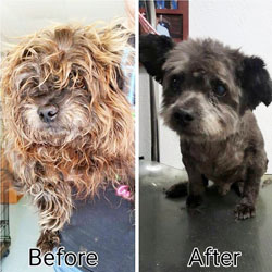 Chester before and after at the animal shelter