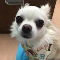 Katie at the vet