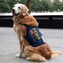 The Search and Rescue Dogs of 9/11