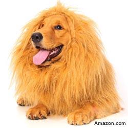 Lion Wig and Mane Dog Costume
