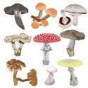 Mushroom Poisoning in Dogs