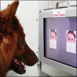 Can dogs read human emotions?
