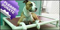 Donate a Kuranda dog bed to Peacable Kingdom Animal Shelter