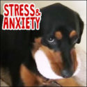Signs of stress and anxiety in dogs