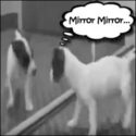 Do Dogs Really See Themselves In The Mirror?