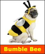 Bumble Bee is #3 pet costume