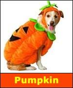 Pumpkin is #1 pet costume