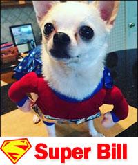 Super Bill Halloween dog costume