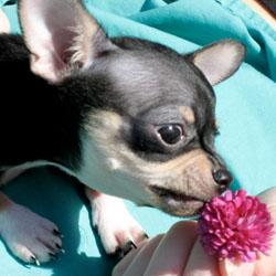 Carl as a puppy