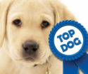Labrador Retriever is AKC's Most Popular Dog Breed