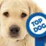 Labrador Retriever Is Most Popular Dog Breed (Again)