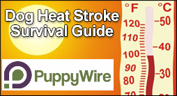 Dog Heat Stroke Survivial Guide