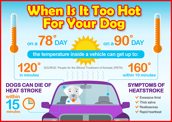 When is it too hot for your dogs?