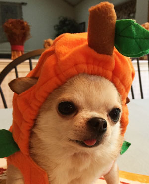 Ted in a pumpkin costume for Halloween