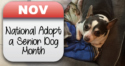 November is National Adopt a Senior Dog Month
