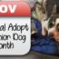 November is National Adopt a Senior Dog Month