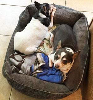 senior pets, Terra & Frazier