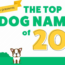 2017's Most Popular Dog Names