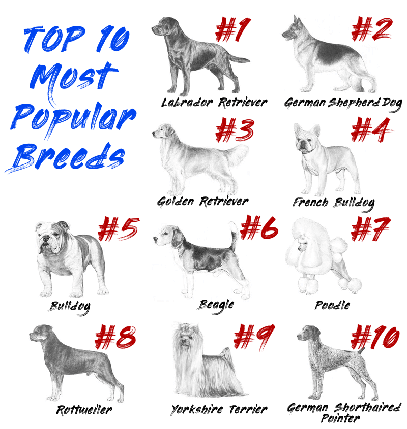 2018;s Most Popular Dog Breeds
