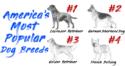 2018's Most Popular Dog Breeds