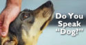 Why 'Dog-Speak' Is Important in Communicating With Your Pet