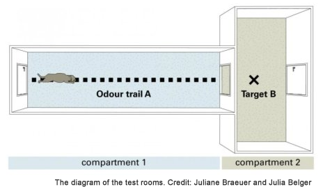 Diagram of the test rooms