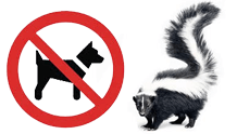 Skunks are not dog friendly!