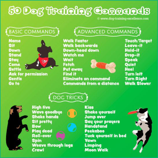 50 Dog Training Commands