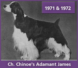 Best in Show - Ch. Chinoe's Adamant James