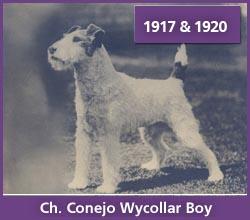 Ch. Conejo Wycollar Boy