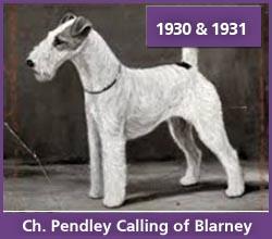 Ch. Pendley Calling of Blarney