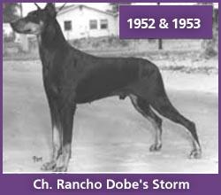 Ch. Rancho Dobe's Storm