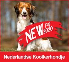 Nederlandse Kooikerhonje