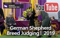 German Shepherd Dogs | Breed Judging 2019
